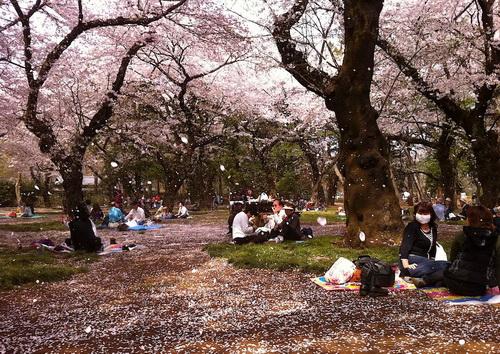 Site de rencontre populaire au japon