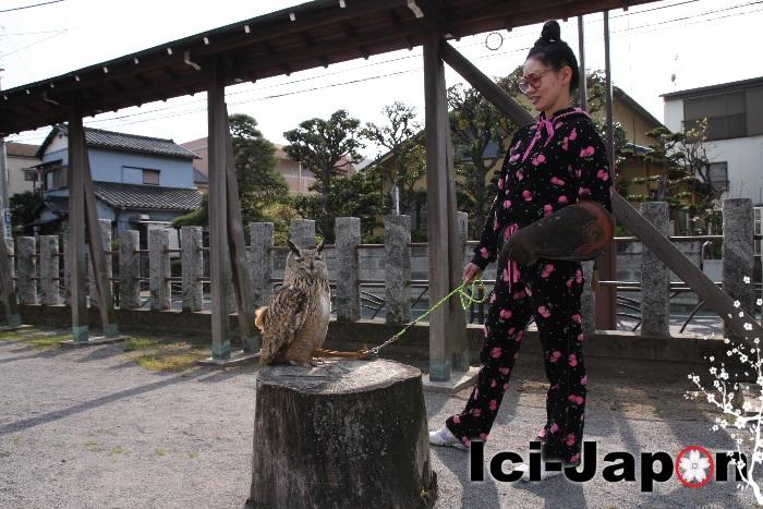 japonais-hibou-tokyo